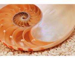 conchiglia spirale